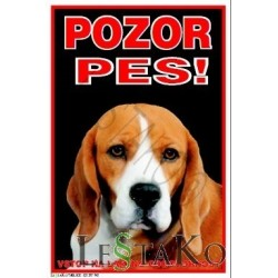 Angleški Beagle
